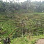Famous Rice Terraces
